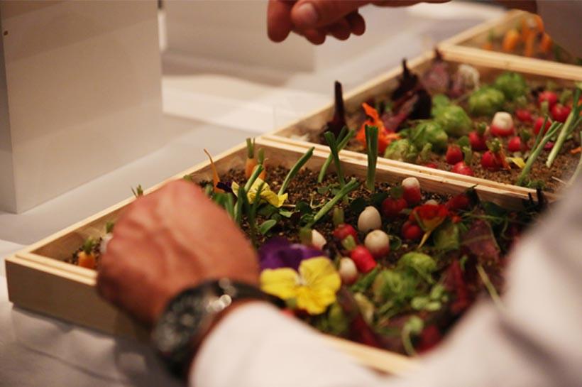 Jardinieres-legumes.jpg